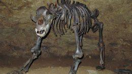 al sahawat times european cave bear
