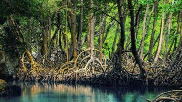 mangroves mexico al sahawat times