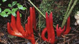 al sahawat times poison fire coral fungus zombie mushroom