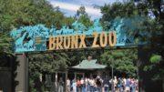 al sahwat times new york bronx zoo