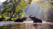 Al Sahawat Times Elephants